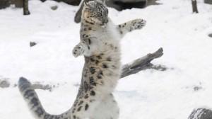 Танго на открытом воздухе. День Снежного Барса